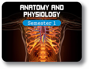 Anatomy and Physiology - Semester - 1: Introduction